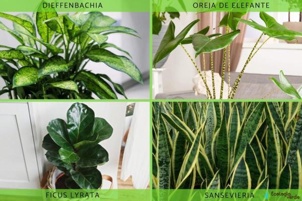 Plantes vertes d'intérieur - Liste de plantes vertes d'intérieur