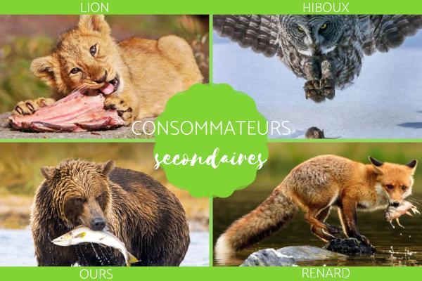 Consommateur secondaire : définition et exemples