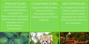 Facteur biotique : Définition, caractéristiques, interaction et exemples