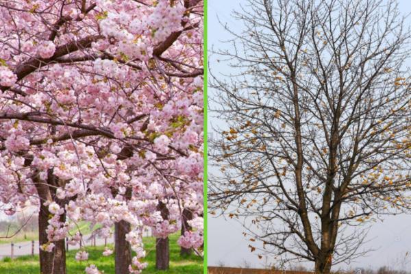 Les différents types d'arbres - Types d'arbres de feuille caduque
