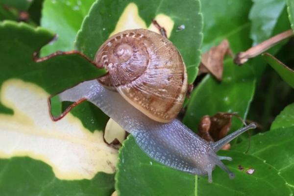 Comment se débarrasser des limaces et escargots dans le jardin