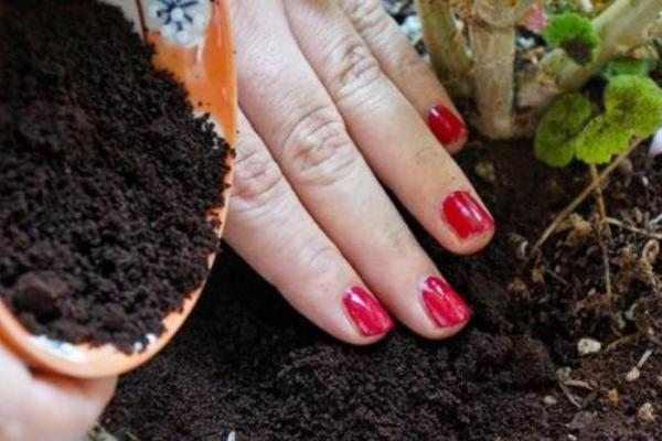 Comment se débarrasser des limaces et escargots dans le jardin - Du café pour lutter contre les escargots et limaces