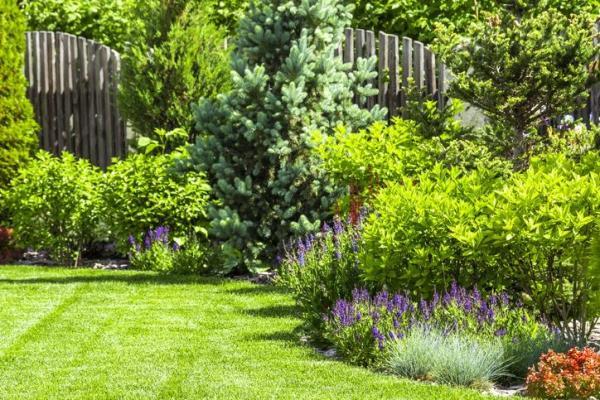 Plantes ornementales - Espèces représentatives et images