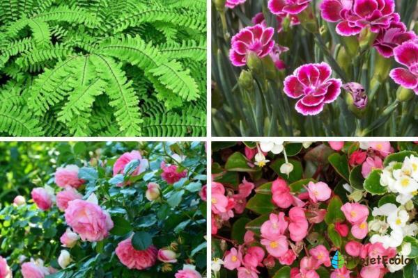 Plantes ornementales - Espèces représentatives et images - Types de plantes ornementales d'extérieur - Noms