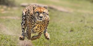 Les animaux les plus rapides du monde - Vitesse des animaux