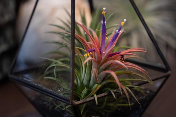 Plantes qui absorbent l'humidité - 20 plantes anti-humidité - Tillandsias