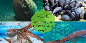 Règne Animalia - Caractéristiques, classification et exemples