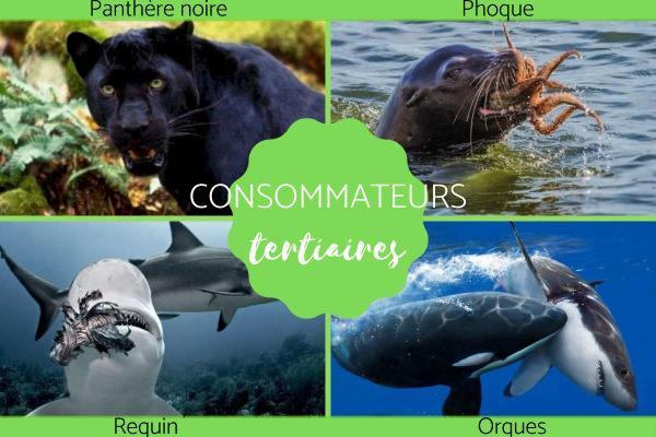 Consommateur tertiaire : Définition et exemples