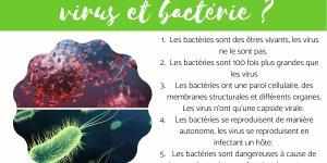 Différence entre virus et bactérie