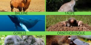 Qu'est-ce qu'un mammifère - Liste et caractéristiques