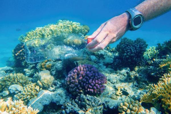 Plastique dans la mer : causes, conséquences et solutions - Conséquences du plastique dans la mer