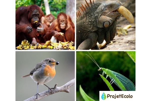 Animaux frugivores - Caractéristiques et liste d'exemples