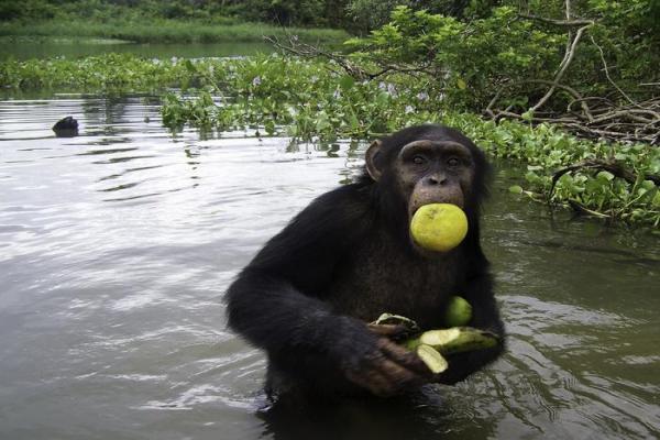 Animaux frugivores - Caractéristiques et liste d'exemples - Exemples de mammifères frugivores