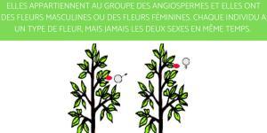 Plante dioïque : Définition, liste et exemples