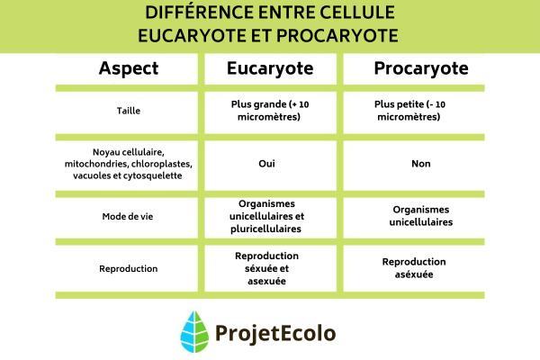 Différences entre cellules eucaryotes et procaryotes - Différences entre cellule eucaryote et procaryote - Résumé