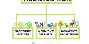 Les 3 niveaux de la biodiversité