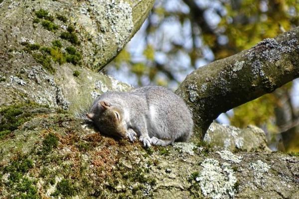 Quels sont les animaux qui hibernent ? - Liste et explications - Pourquoi certains animaux hibernent-ils ? - Définition de l'hibernation
