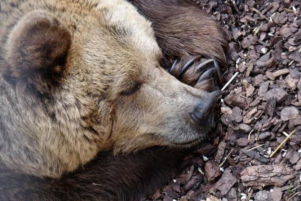 Quels sont les animaux qui hibernent ? - Liste et explications