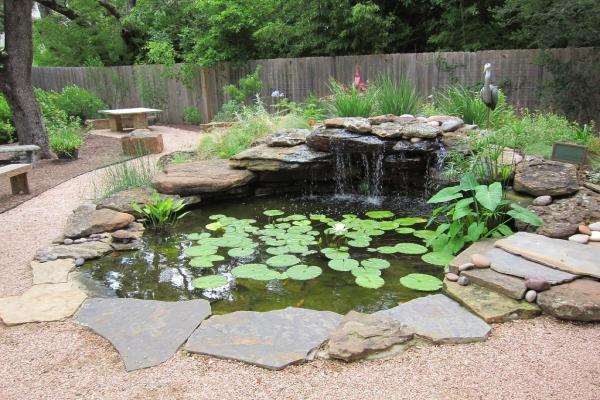+50 plantes aquatiques pour bassin - Noms et caractéristiques - Types de plantes aquatiques pour bassin