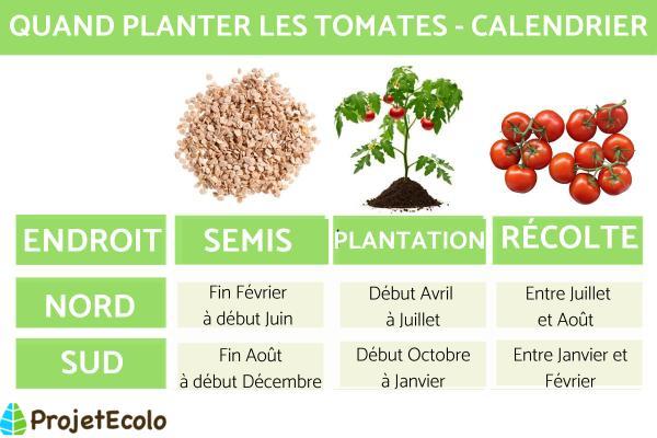 A quel moment planter les tomates - Quand planter les tomates - hémisphère Sud