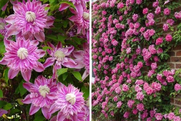 Plantes grimpantes - Liste, d'intérieur, extérieur et fleuries - Caractéristiques et types de plantes grimpantes