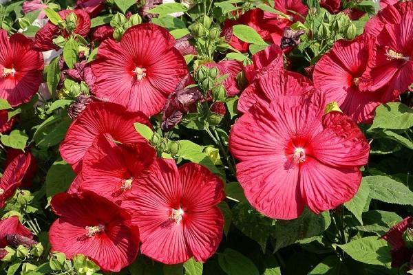 16 plantes de plein soleil - Liste et photos