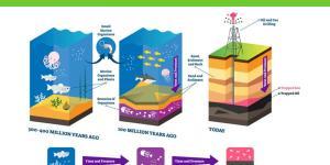Comment se forme le pétrole