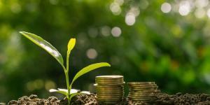 Capital naturel - Définition et exemples