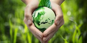 Disparition de la biodiversité : causes et conséquences