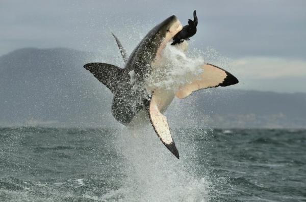 Écosystème marin : définition, caractéristiques, flore et faune - Faune des écosystèmes marins
