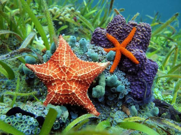 Écosystème marin : définition, caractéristiques, flore et faune - Que sont les écosystèmes marins ?