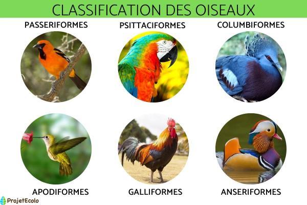 Classification des oiseaux - Définition et photos
