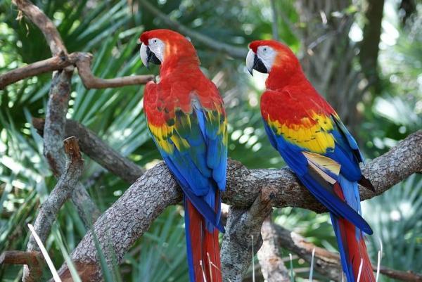 Classification des oiseaux - Définition et photos - Classification des oiseaux en fonction de leur habitat