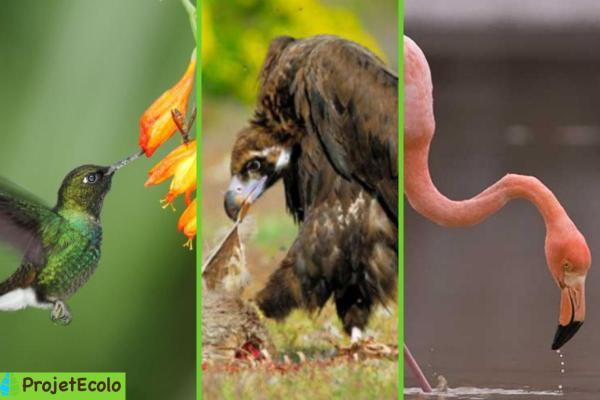 Classification des oiseaux - Définition et photos - Classification des oiseaux en fonction de leur régime alimentaire