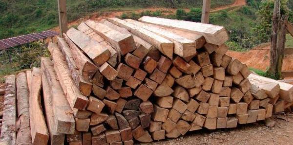 Exposé sur la déforestation - Causes, conséquences, définition et solutions - Causes de la déforestation provoquée par l'Homme