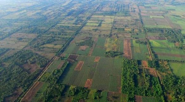 Exposé sur la déforestation - Causes, conséquences, définition et solutions