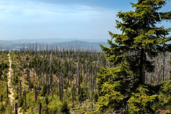 Exposé sur la déforestation - Causes, conséquences, définition et solutions - Images de déforestation