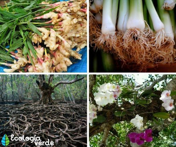 Les différents types de racines