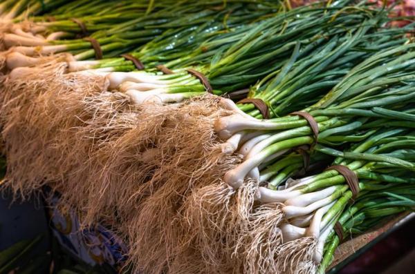 Les différents types de racines - Racines ramifiées