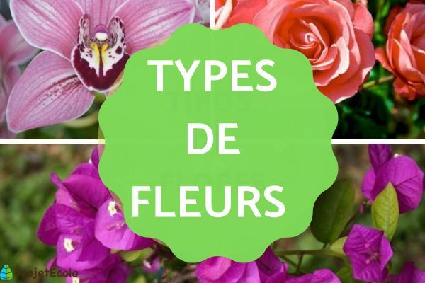 Les types de fleurs