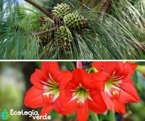 Les types de fleurs - Types de fleurs - Classification des plantes
