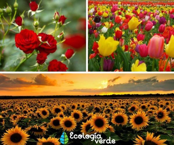 Les types de fleurs - Types de fleurs les plus connues - noms des fleurs les plus célèbres