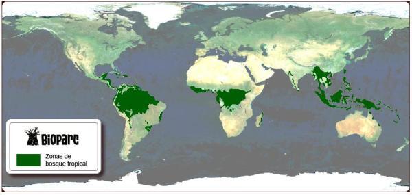 Forêt tropicale - Caractéristiques, flore et faune - Que sont les forêts tropicales : Définition et caractéristiques