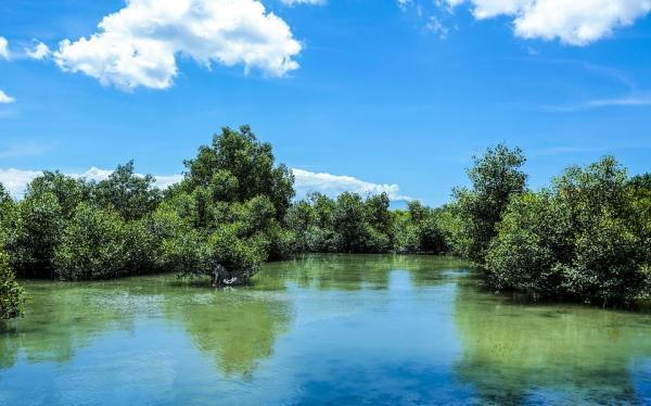 Forêt tropicale - Caractéristiques, flore et faune - Types de forêts tropicales