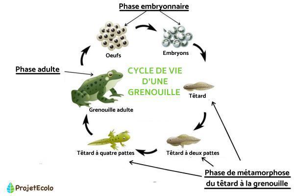 Caractéristiques des êtres vivants - Caractéristiques des organismes vivants : alimentation, métabolisme et excrétion