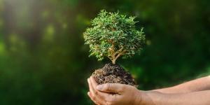 Branches de l'écologie et objets d'étude