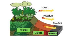 Comment se forme le charbon ?