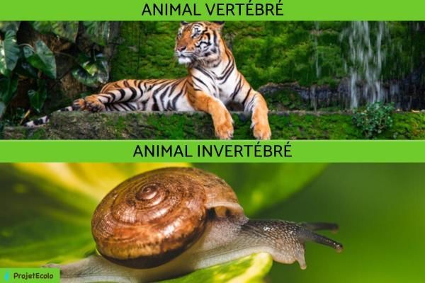 Animaux vertébrés : classification, caractéristiques et exemples - Différences entre les animaux vertébrés et invertébrés