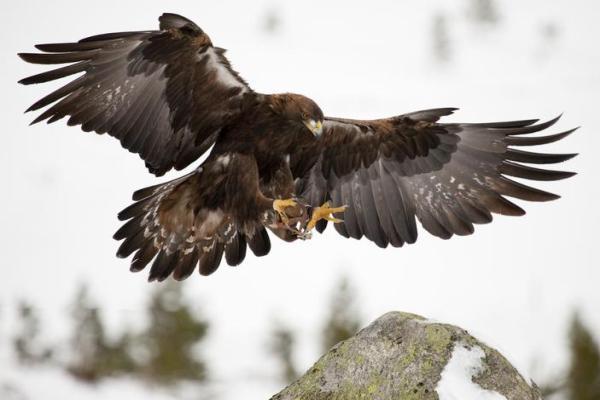Animaux vertébrés : classification, caractéristiques et exemples - Oiseaux