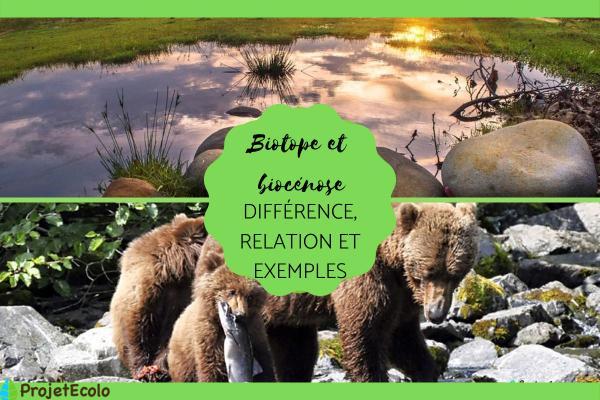 Biotope et biocénose : différence, relation et exemples